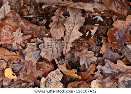 old yellow fallen autumn leaves background #116107432
