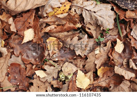 old yellow fallen autumn leaves background #116107435
