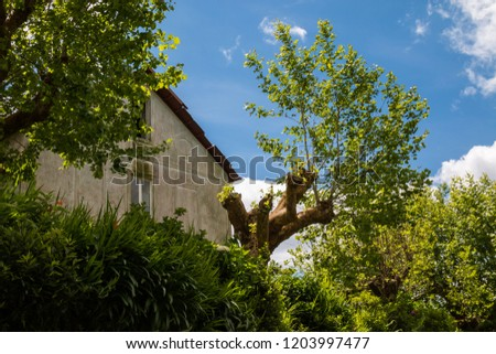 Older house surrounded by nature: trees, bushes and plants, everything fresh green in the spring. Blue sky with white clouds. Island Sao Miguel, Azores Islands, Portugal. #1203997477