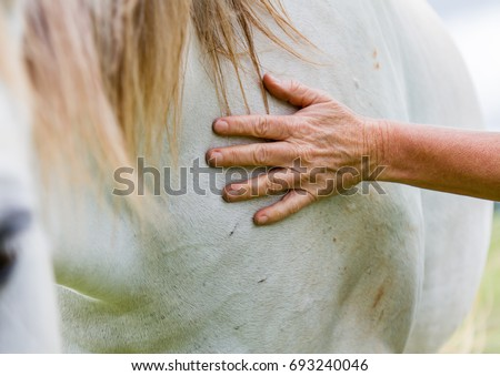 Older woman caressing a grey horse placing her hand on its neck in a close up cropped view on an Equine Assisted Psychotherapy Farm in NSW Australia - Shutterstock ID 693240046