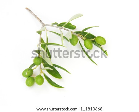 olive branch isolated on white. - stock photo