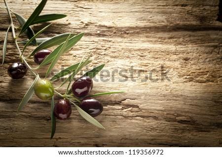 olive branch on old olive tree