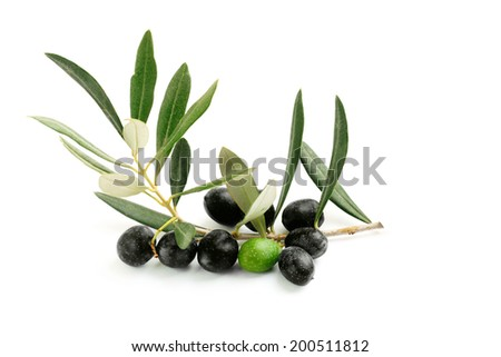 Olive branch with leaves and a green and black olives