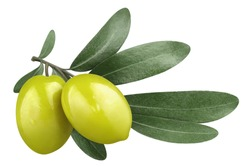 Olive branch with two delicious green olives, isolated on white background