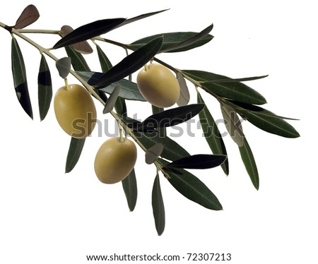 olive branches with three olives