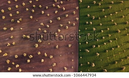 olive fields in Morocco in aerial view #1066447934