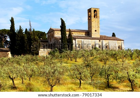 Olive Grove in Tuscany, Italy, Europe