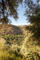 olive grove of Ouzoud Waterfalls of Marrakech in Morocco