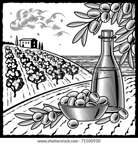 Olive harvest black and white