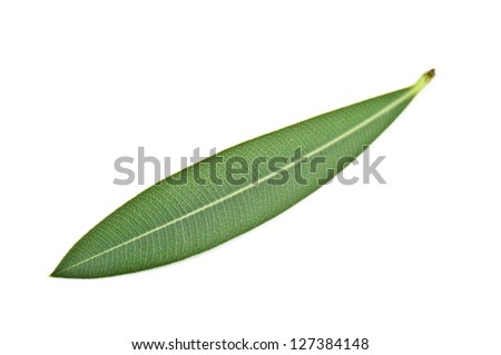 olive leaf on white background