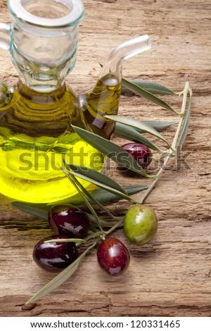 olive oil and olive branch backlit on old olive tree