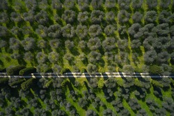 Olive orchards in Italy. Road through the olive grove aerial view. Aerial view of olive trees lake garda italy. Top view of a grove of olive trees.