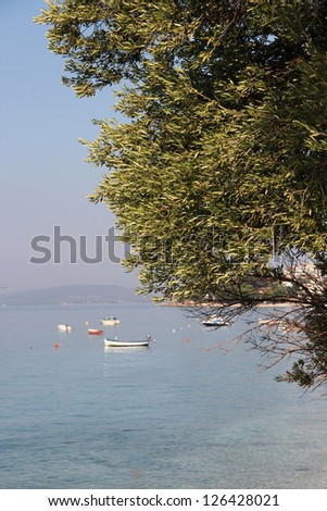 Olive tree and Mediterranean sea - stock photo