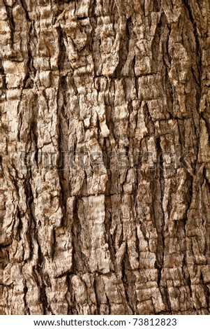 Olive tree Olea europaea bark background texture pattern