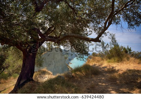 Olive tree overlooking Peroulades beach, Corfu Island, Greece