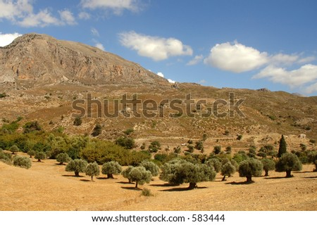 Olive Trees and Mountains. Crete, Greece