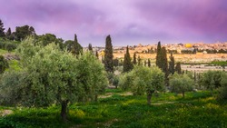 Olive trees on the Mount of Olives with view of Old City Jerusalem's religious landmarks: Russian church of Mary Magdalene, Mount Zion, Dome of the Rock and the Golden Gate, with beautiful purple sky