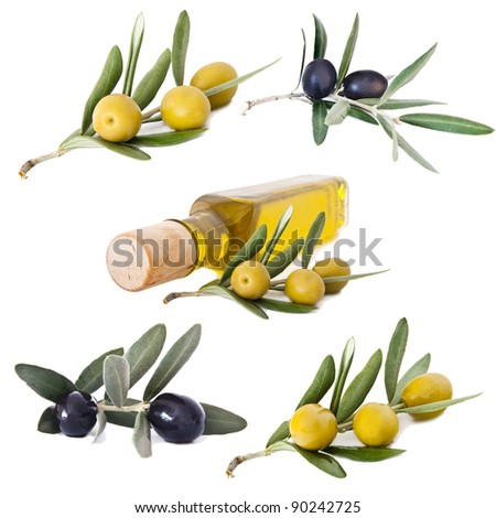 olives and oil collection
