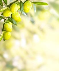 Olives background