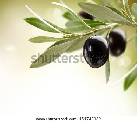 Olives Black Ripe Olive on a tree Food Border Design Over White Background