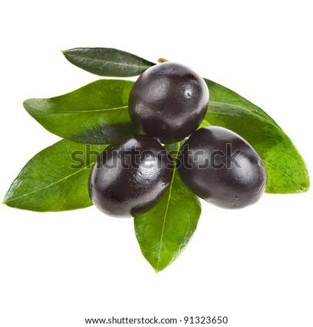olives branch with black olive isolated  on a white background