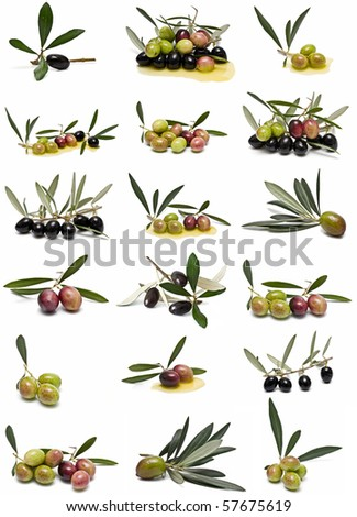 Olives collection isolated on white background.