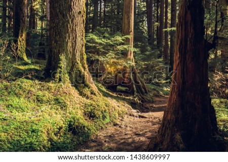 Olympic National Forest, Olympic National Park Washington