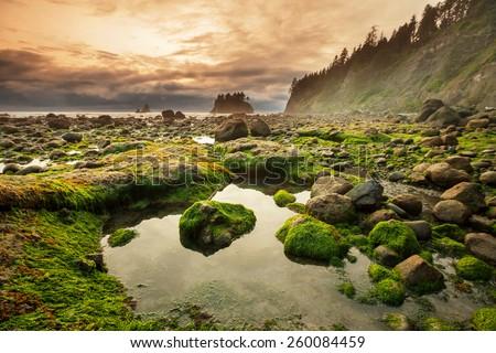 Olympic National Park landscapes