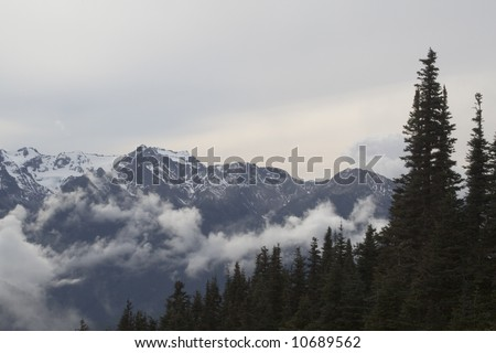 Olympic National Park Mountains and Snow #10689562