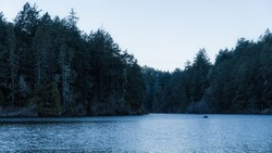 Ominous and Eerie Forest Lake Photo in Water