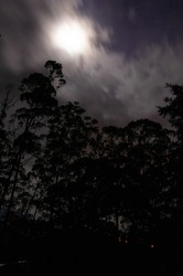 Ominous Long Exposure Night Landscape with clouds moving in front of a full moon casting silhouettes of tall trees