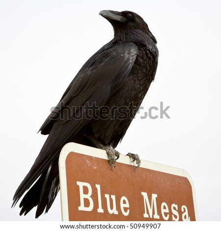 Ominous Looking raven perched on top of a sign post in the Pained Desert, Arizona.