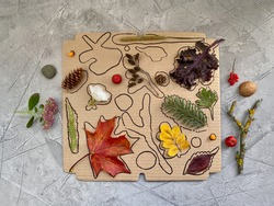 On a cardboard box, silhouettes of natural material are drawn, a Children's game for attention,