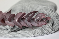 On a gray background, eucalyptus leaves and a knitting scarf . The concept of needlework, handmade.