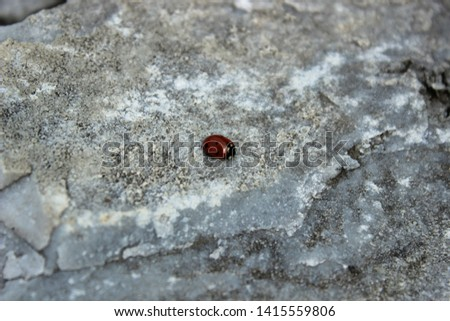 on a gray rough rough stone with cracks sits a small red ladybug with black dots, there is a place for text in the photo