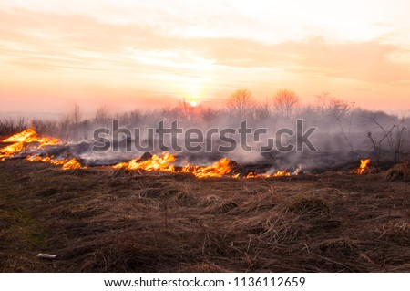 On a hot summer day, dry grass is burning on the field. Burning field with dry grass.  #1136112659