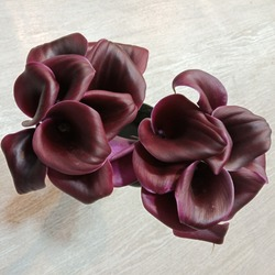 On a light surface, closeup of strict and refined, elegant and luxurious exotic flowers of rich color are black Calla lilies with Burgundy highlights on the edges of the petals.