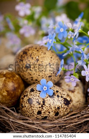 on a sacking nest, quail eggs and forget-me-not flowers