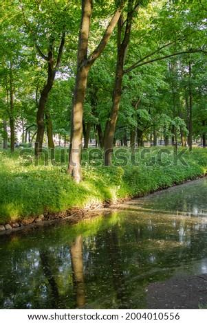 on a sunny day, the rays fall on the tree trunk through the foli Stock fotó ©