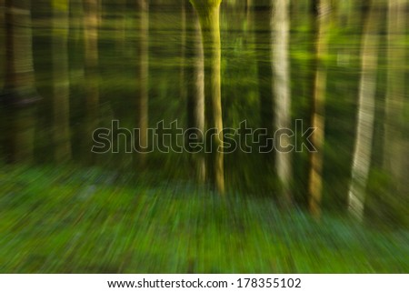 On a trip through the forest