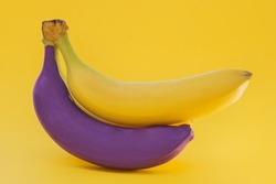 on a yellow background in a bunch of two bananas, one yellow, the other purple. The idea is to be unique, not like everyone else, to stand out from the crowd. Horizontal photo, close-up