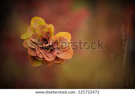 On an abstract dark background a composition of autumn leaves