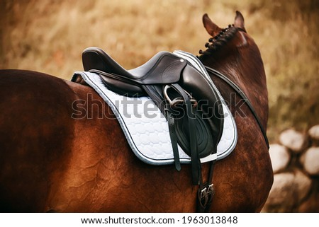 On an autumn day, a rear view of a standing bay horse with a braided mane, on the back of which a black leather saddle is worn. Equestrian sports. Сток-фото ©