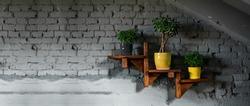 On brick wall, a wooden shelf with flowerpots. Green Plants Crassula ovoid, ficus benjamin natasha, in trendy colors pots: gray, yellow. Stylish, modern interior. Wide banner, copy space. Bright loft