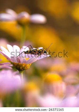On flower