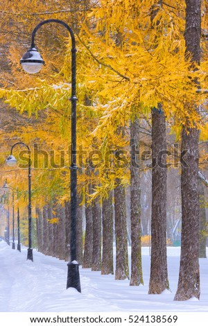 ON GUARD - trees in the park are in line in the snow - Shutterstock ID 524138569
