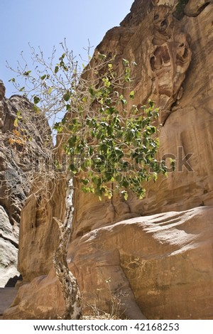 On half the green tree showing improbable aspiration by a life in heavy conditions among rocks in absence of soil