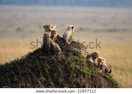 On Safari in the Masai Mara game reserve Kenya Africa