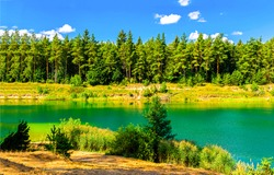 On the bank of the forest river. River in forest. Forest river landscape