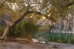 On the banks of the river grows a large tree, leaning towards the water, the river is surrounded by rocks, evening of a summer day